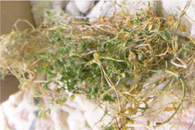 乾燥した野草